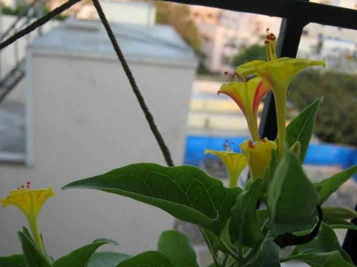 krishnakali bouquet IMG_0010 16.4.15