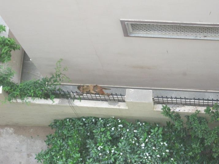 monkey piggyback 9.8.15 IMG_0082