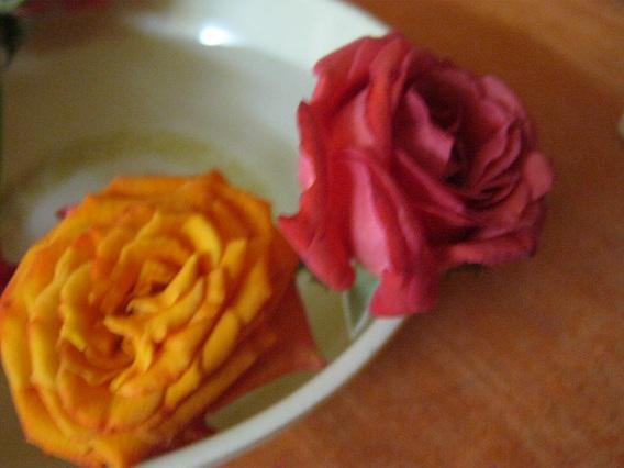 roses 2 IMG_0031 8.8.15