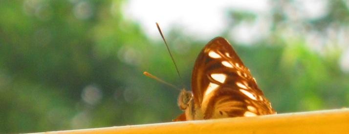 butterfly 9.11.15 IMG_0008 FS