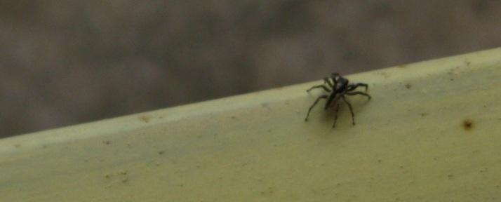 IMG_0011 spider 24.11.15