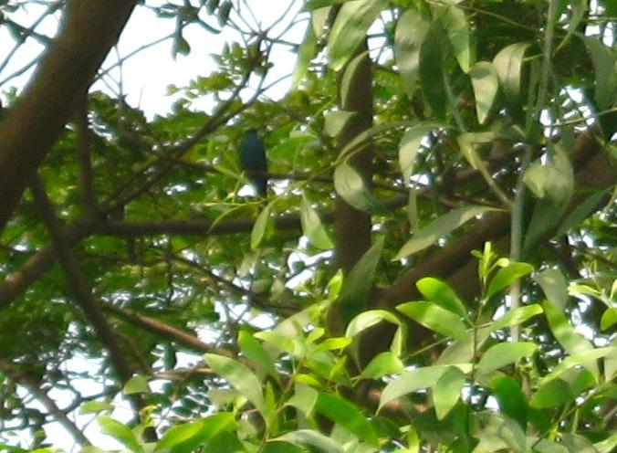 IMG_0003 28.1.16 unknown bird blackish green