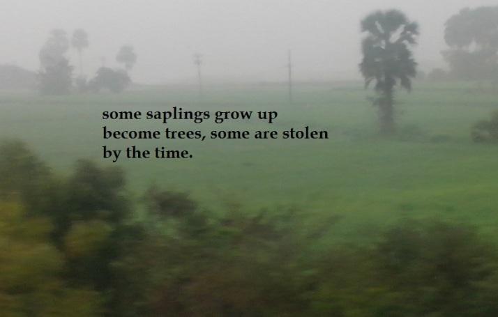 time and grow for ronovan